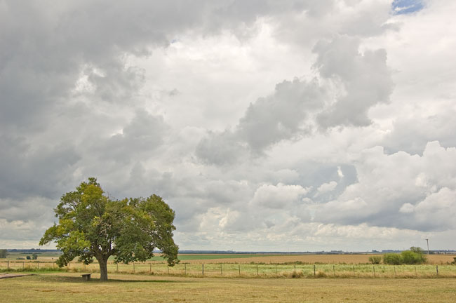 cielo, nubes, árbol, campo, sky, clouds, tree, country